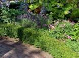 Buchsblättrige Stechpalme 'Dark Green' Ilex crenata