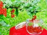 Beeren - Rote Johannisbeere 'Junifer', 30-40 cm, Ribes rubrum 'Junifer', Containerware