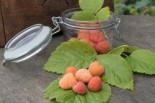 Himbeere 'Valentina' ®, 30-40 cm, Rubus idaeus 'Valentina' ®, Containerware