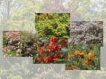 Vogelnährgehölze aus 10 Pflanzen, 60-100 cm, zur Unterstützung der Insekten und Vögel, Containerware