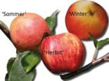 Familienbaum Sommer-Herbst-Winter