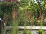 Kleines Pfeifengras 'Moorhexe', Molinia caerulea 'Moorhexe', Topfware