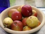 Ministämmchen Apfel 'Braeburn', Stamm 20-30 cm, 50-60 cm, Malus 'Braeburn', Containerware